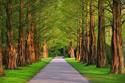Wycinka drzew w krakowskim parku